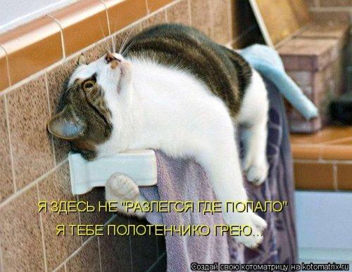 Лучшие котоматрицы недели (38 фото)