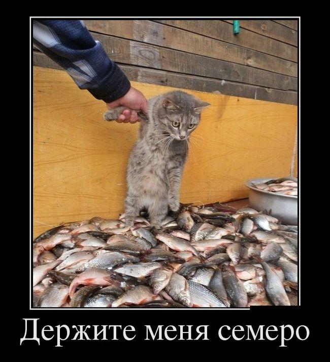 Демотиваторы ржака