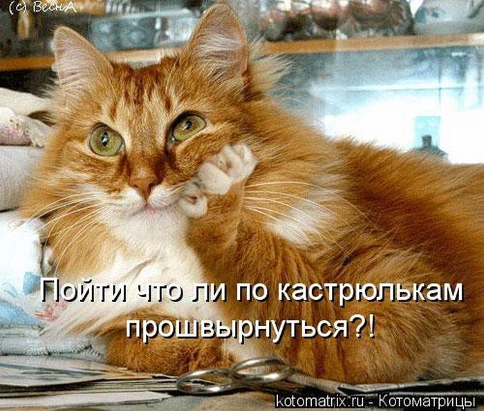 http://www.bugaga.ru/uploads/posts/2012-05/1337929834_kotomatricy-16.jpg