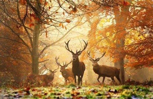 Животные на закате