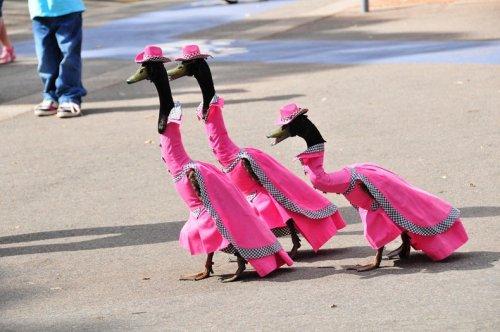 Утиный парад мод