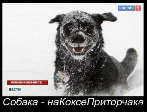 Демотиваторы ржака (24 шт)