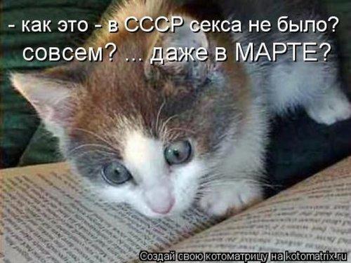 Котоматрица 1336115689_1
