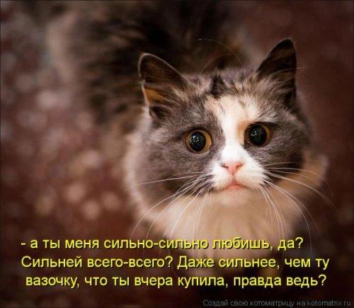 Котоматрица 1336115728_22