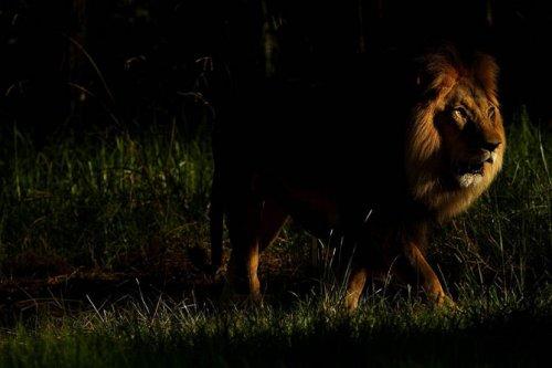 Лучшие фотографии животных за неделю (20 шт)