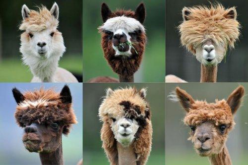 Милые животные в фотографиях (21 фото)