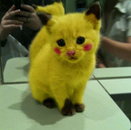 Котенок-пикачу