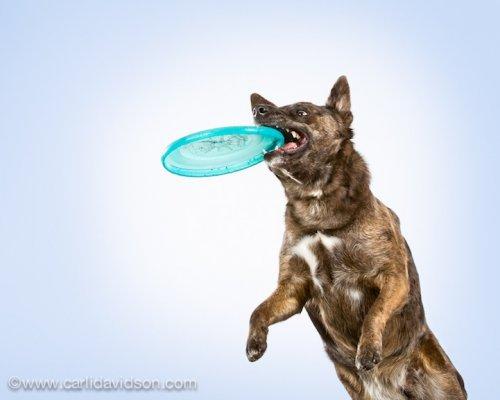 Прыгающие собаки от Карли Дэвидсон