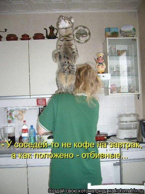 Лучшие котоматрицы недели (36 фото)