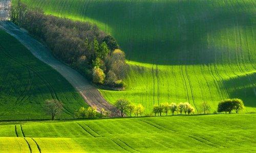 Зеленые волны Моравии