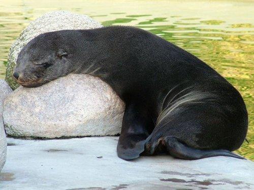 Спящие животные (14 фото)