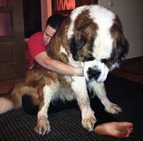 Большие собаки (7 фото)