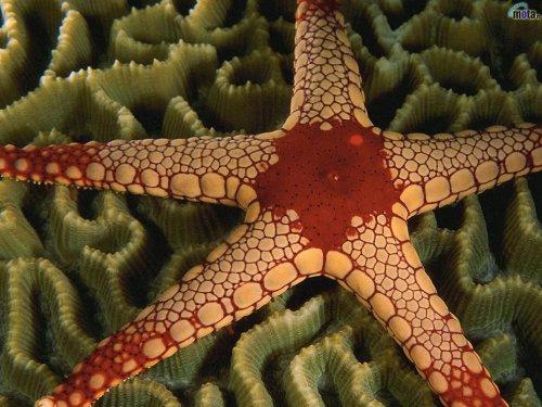Удивительные морские звезды
