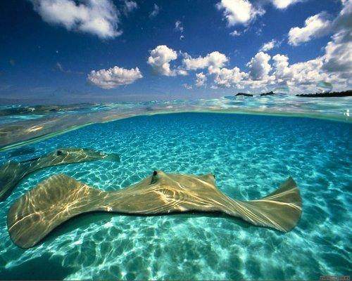 Подводный мир Дэвида Дубиле