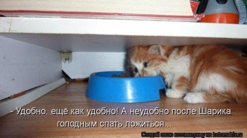 Лучшие котоматрицы недели (31 шт)