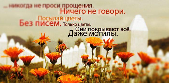 цветы цитаты и афоризмы сильно