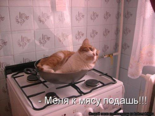 Лучшие котоматрицы недели (29 фото)