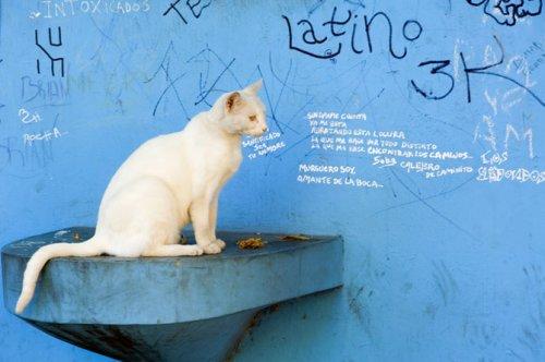Кругосветное путешествие с уличными котами