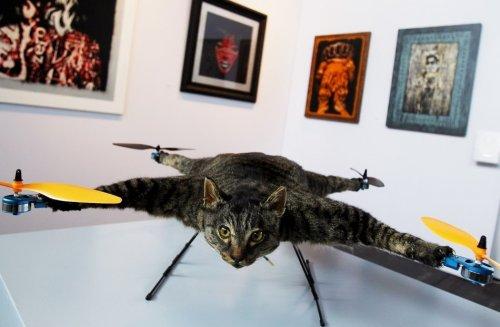 Голландец сделал вертолет из чучела своего кота