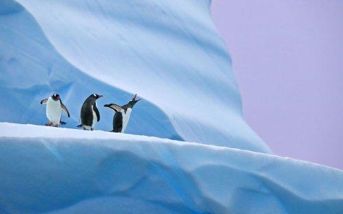 Фотографии дикой природы Энди Роуса