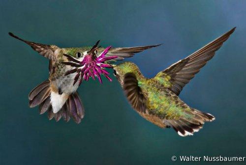 Победители Всемирного конкурса фотографии птиц 2012