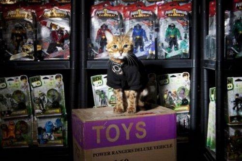 Кот получил должность охранника игрушек