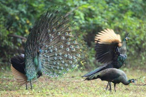 Заповедник дикой природы Phu Khieo
