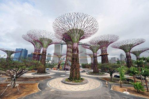 Супер-деревья в Cингапуре