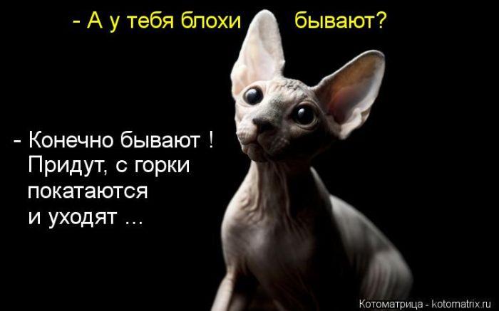 http://www.bugaga.ru/uploads/posts/2012-07/1342770028_kotomatricy-2.jpg