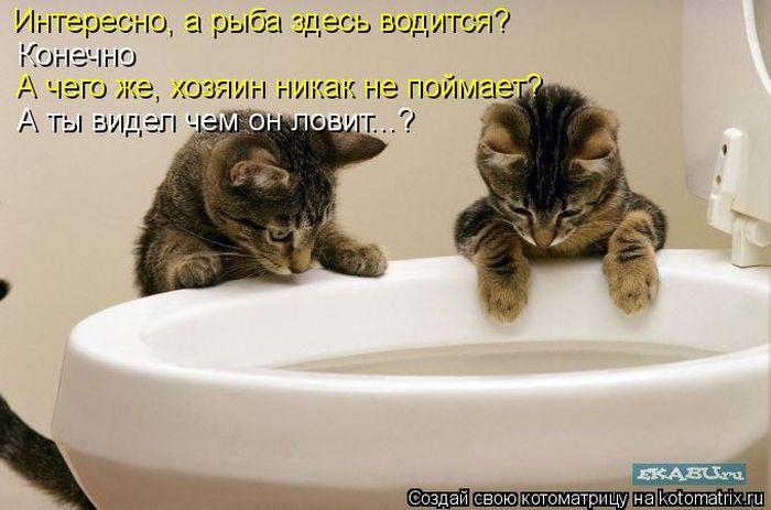 Как сделать чтобы котенок покакал
