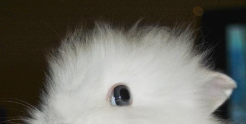 Кролик и вишня