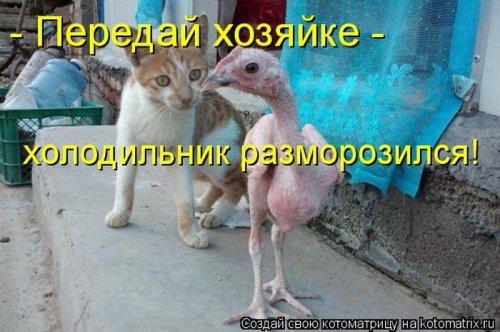 Котоматрица 1341573624_kotomatricy-28