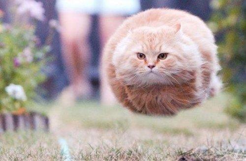 Фото котов, сделанные в нужный момент (31 шт)