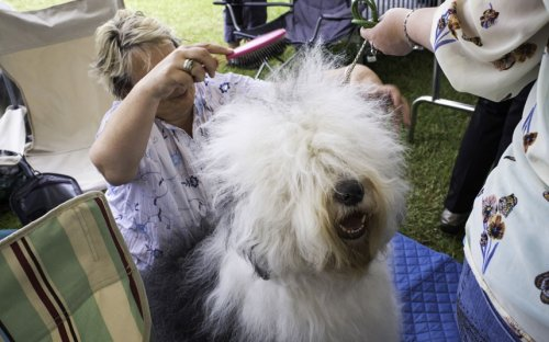 �������� ����� �Windsor Championship Dog Show�