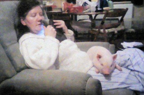 Подсунули свинью