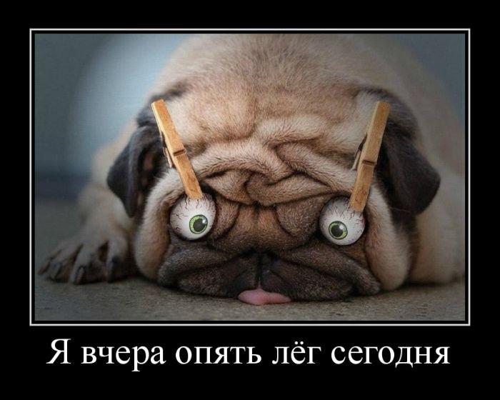 http://www.bugaga.ru/uploads/posts/2012-08/1343801027_demotivatory-22.jpg