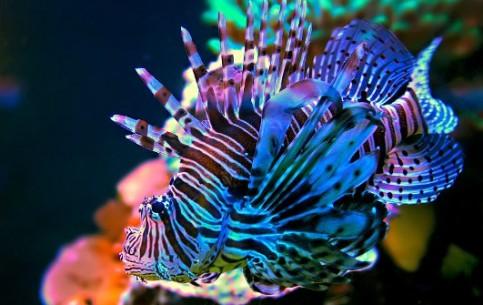 Красота подводного мира манит и очаровывает и новичка и опытного специалиста.