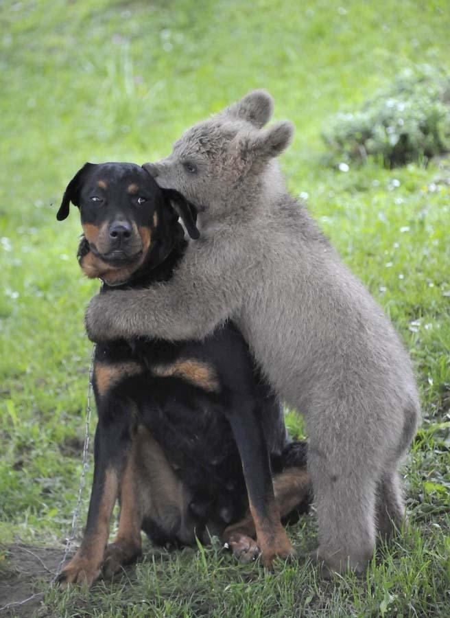 межвидовые взаимоотношения в мире животных основанные на ловле