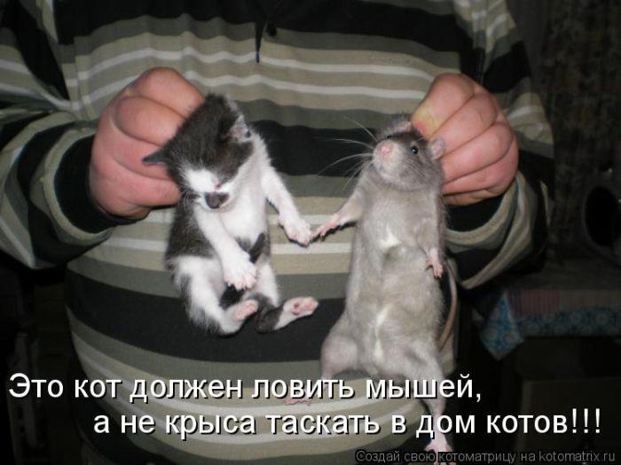 мышей травить или ловить
