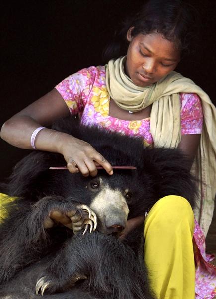 Медведь из индийской семьи