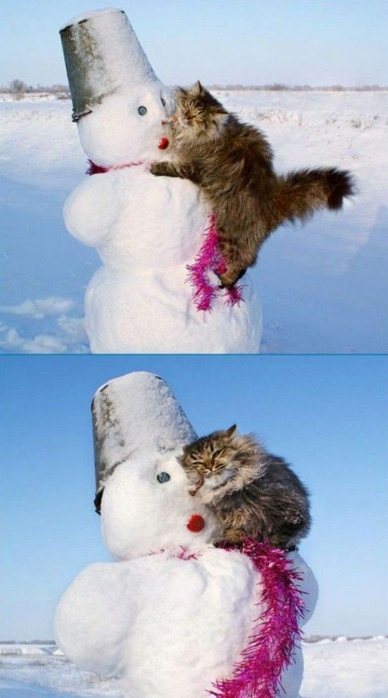 Картинка кот снеговик