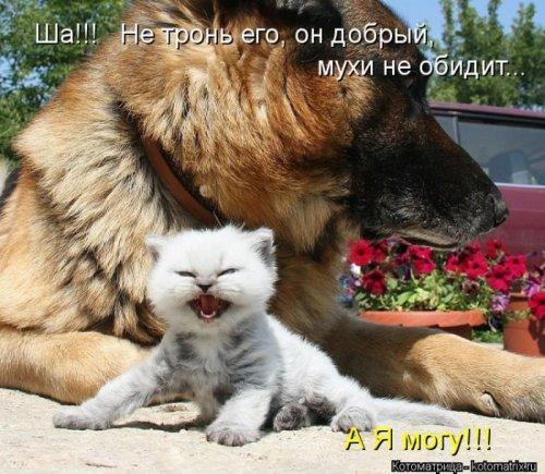 Лучшие котоматрицы недели (33 шт)
