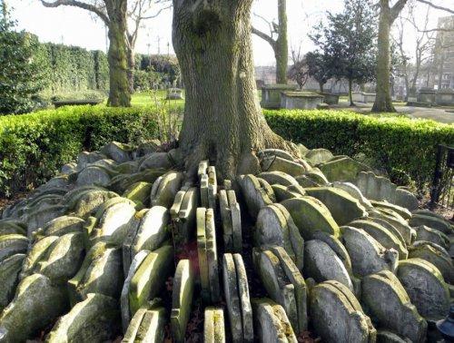 Дерево сотни надгробий