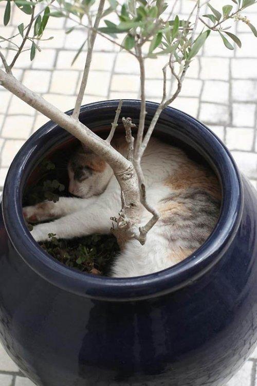 Идеальные места отдыха для котов
