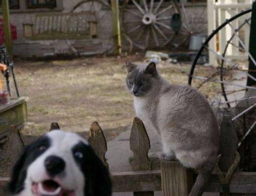 Фотобомбы с животными (32 шт)