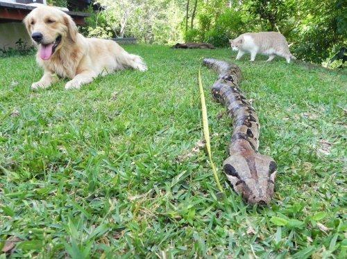 Пес спас хозяев от смерти