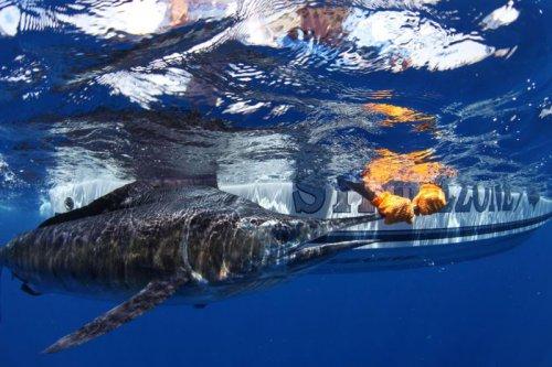Сюрприз от акулы