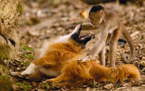 Фотографии животных за неделю (23 шт)