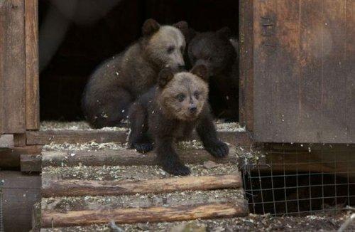 """Питомник для медвежат """"Чистый лес"""""""