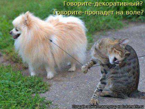 Смешные котоматрицы за неделю (35 шт)